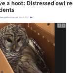 Mill Residents Rescue Distressed Owl